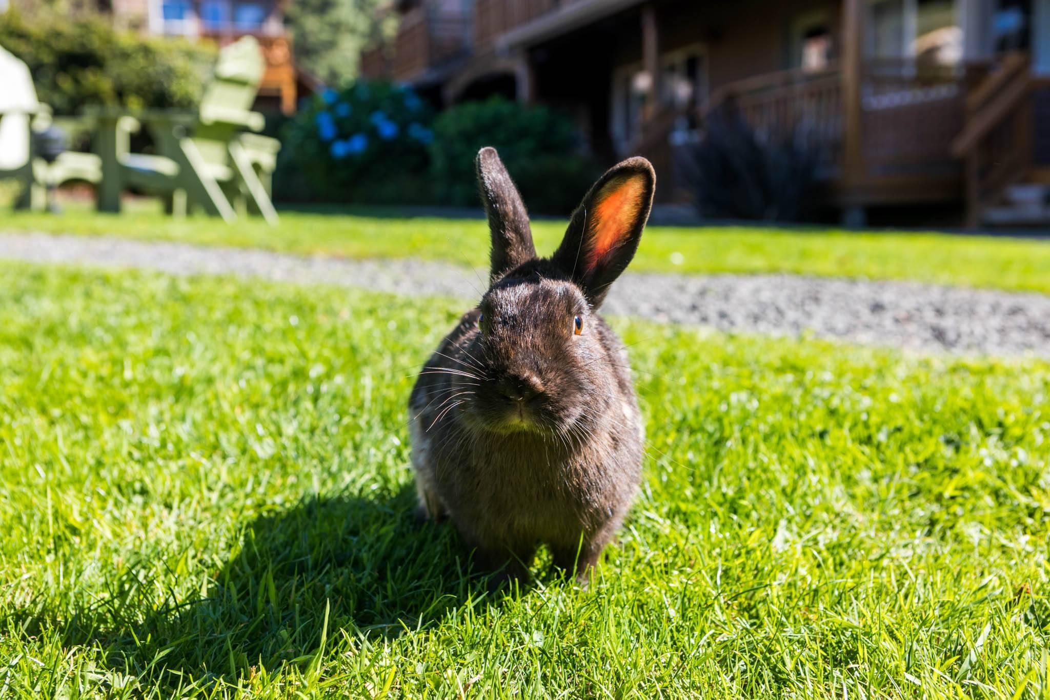 Bunny at Inn at Cannon Beach