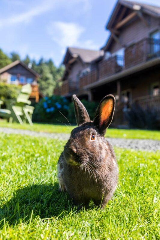 Summer fun with the Cannon Beach bunnies