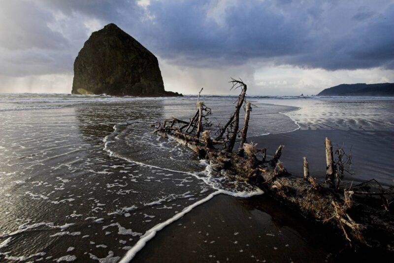 Tidal treasure on the beach