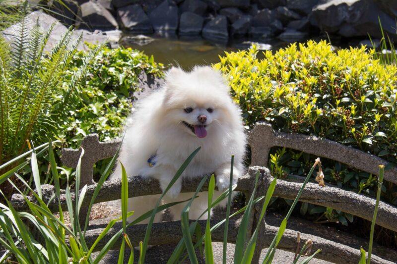 A wonderful guest dog enjoying the sun