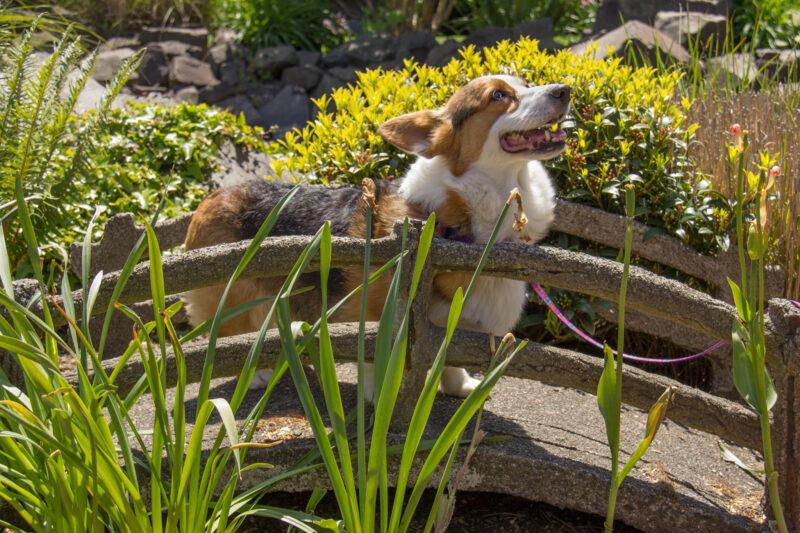 Dog in the sunshine