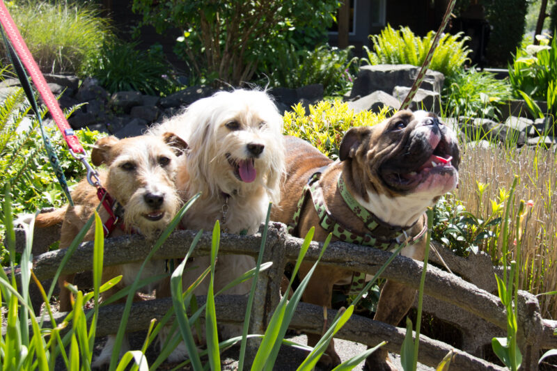 Happy dogs panting in the sun