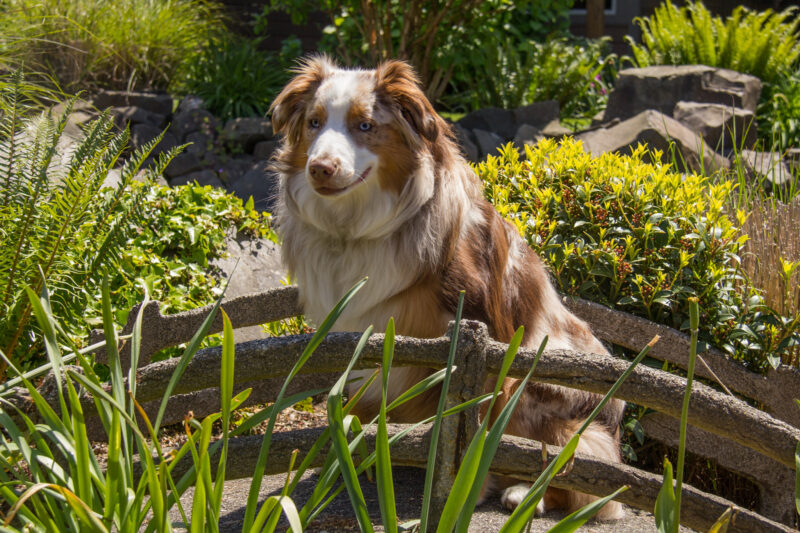 Dog sits in the sun in the summer